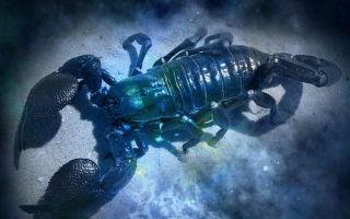 Гороскоп на февраль 2017: Скорпион (женщина) от Павла Глобы