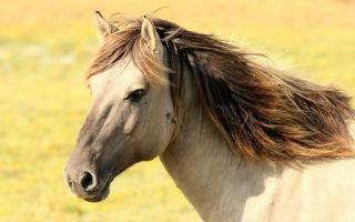 Что ждет Лошадь в год Петуха 2017