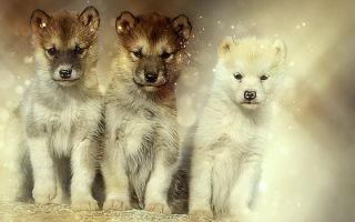 Сонник: собака укусила за руку, за ногу, есть блохи или умершая собака снится живой своему хозяину