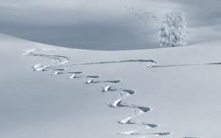 К чему снится снег во сне для женщины