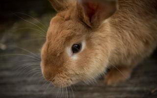 Год Петуха для Кота 2017 (гороскоп для Кролика)