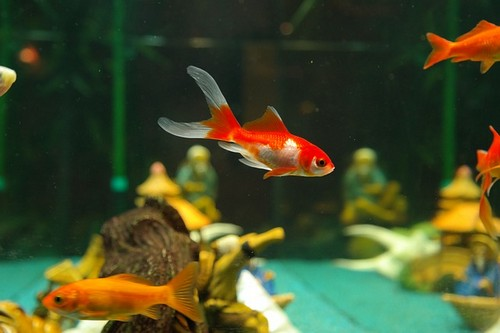 Комнатный аквариум по правилам фен-шуй