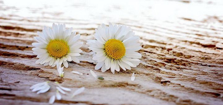 Овен и Стрелец: совместимость в любовных отношениях