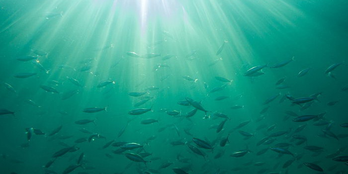 к чему снится рыба женщине живая в воде плавает