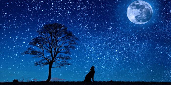 к чему снится большая собака во сне для женщины